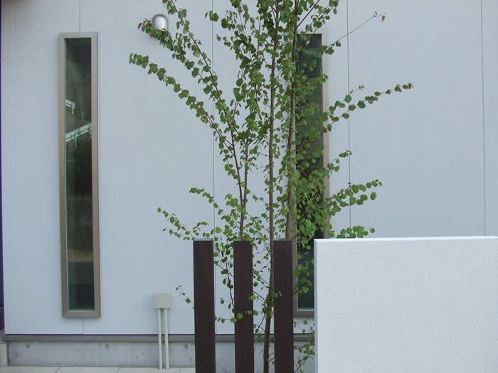 シンボルツリーにカツラを|シンプルモダン外構